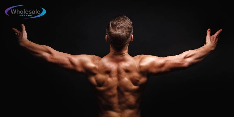 Do peptides help muscle growth? - Updated 2021.