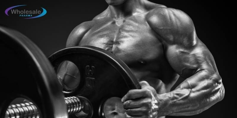 Does CJC 1295 Build Muscle? - Peptides Offer For Sale.
