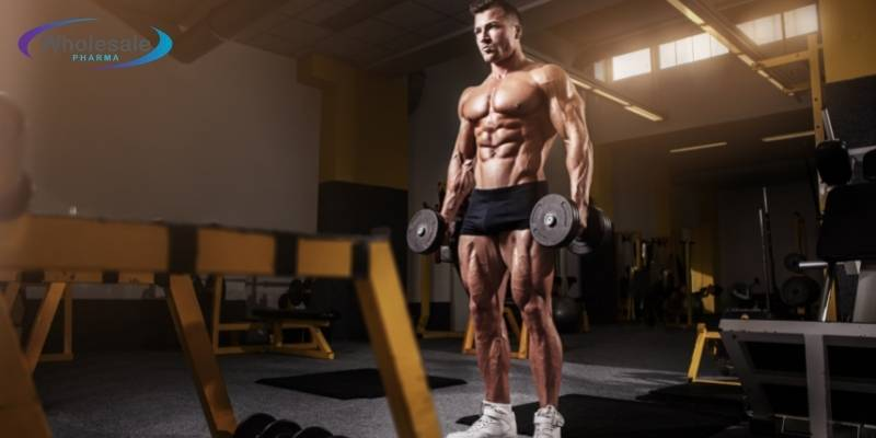 Just how can I build muscle quickly? - WholeSale Pharma Peptides.